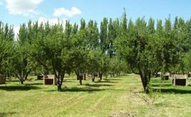 Camping Alto Verde - Campings / Mendoza
